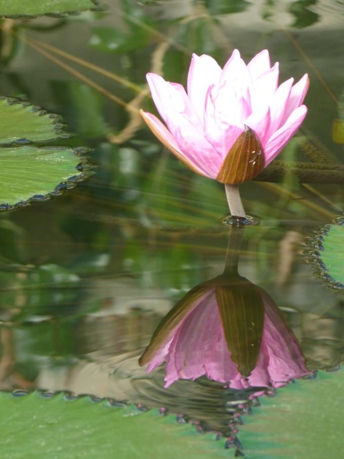 Kew Gardens February 2013 by GiftedPhoenix
